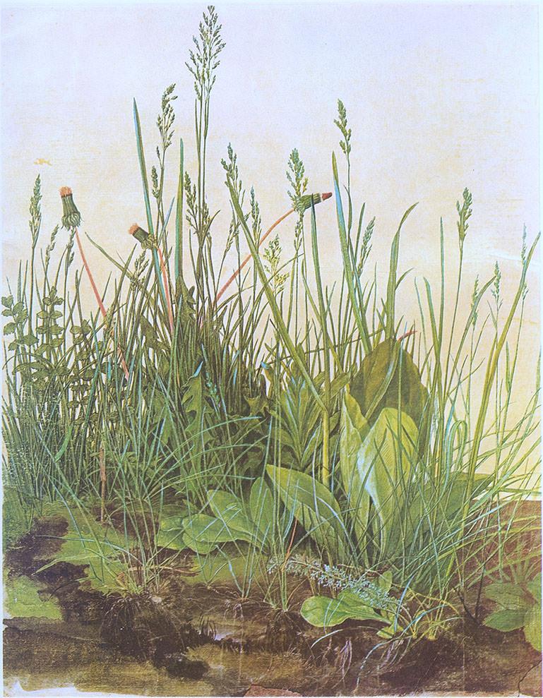 Abb.1 Albrecht Dürer, Das große Rasenstück , 1503, Aquarell und Deckfarben, mit Deckweiß gehöht, 40,8 x 31,5 cm, Albertina, Wien ©Wikipedia, Public Domain