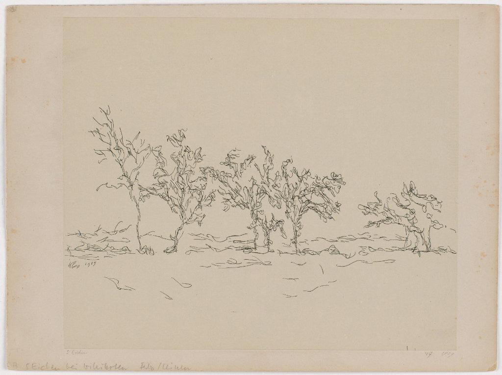 Paul Klee,  Fünf Eichen bei Wittikofen  [sic!], 1909, Feder auf Papier auf Karton  Zentrum Paul Klee, Bern, Leihgabe aus Privatbesitz ©ZPK Bildarchiv