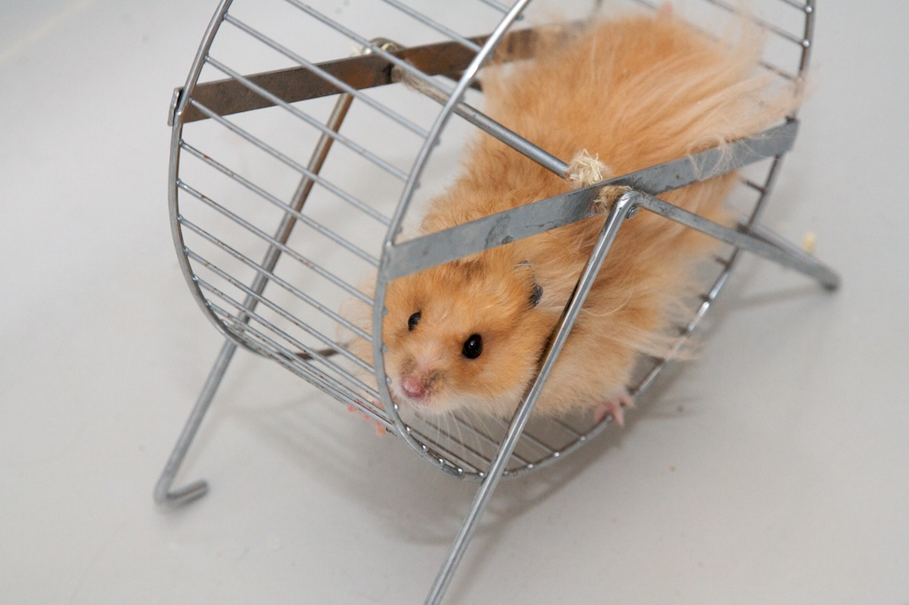 roue-hamster.jpg