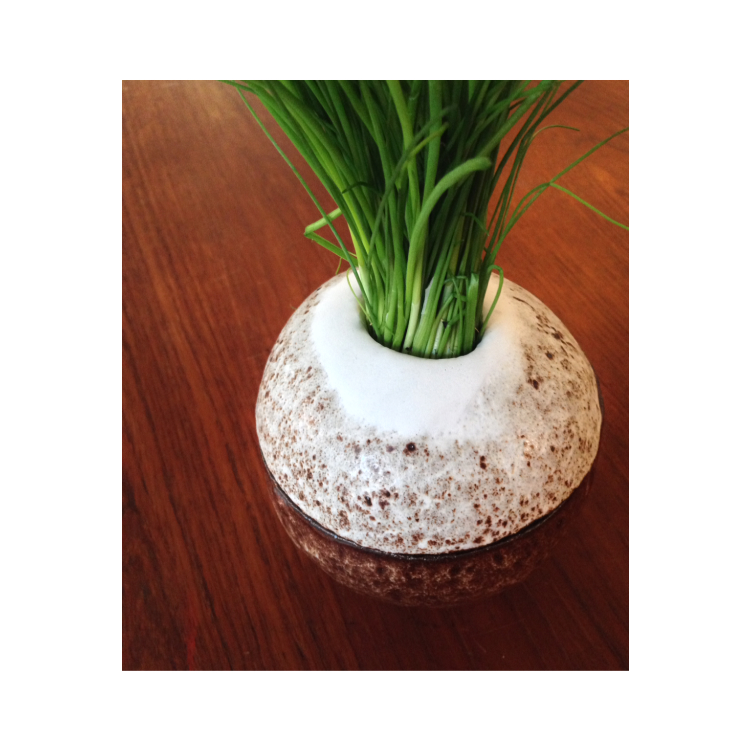 Denne her kokosnødlignende purløjsholder skål er god på forårsbordet. Purløget er fikst placeret, og mankan lige klippe toppen af med en saks.  Overfladen er meleret chokolade farvet med en top af hvidt, mat porcelæn.