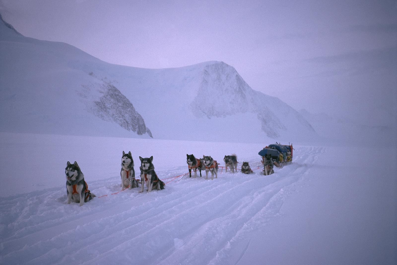 Trans-Antarctica dog sled team on the Antarctic Peninsula. Photo ©Will Steger
