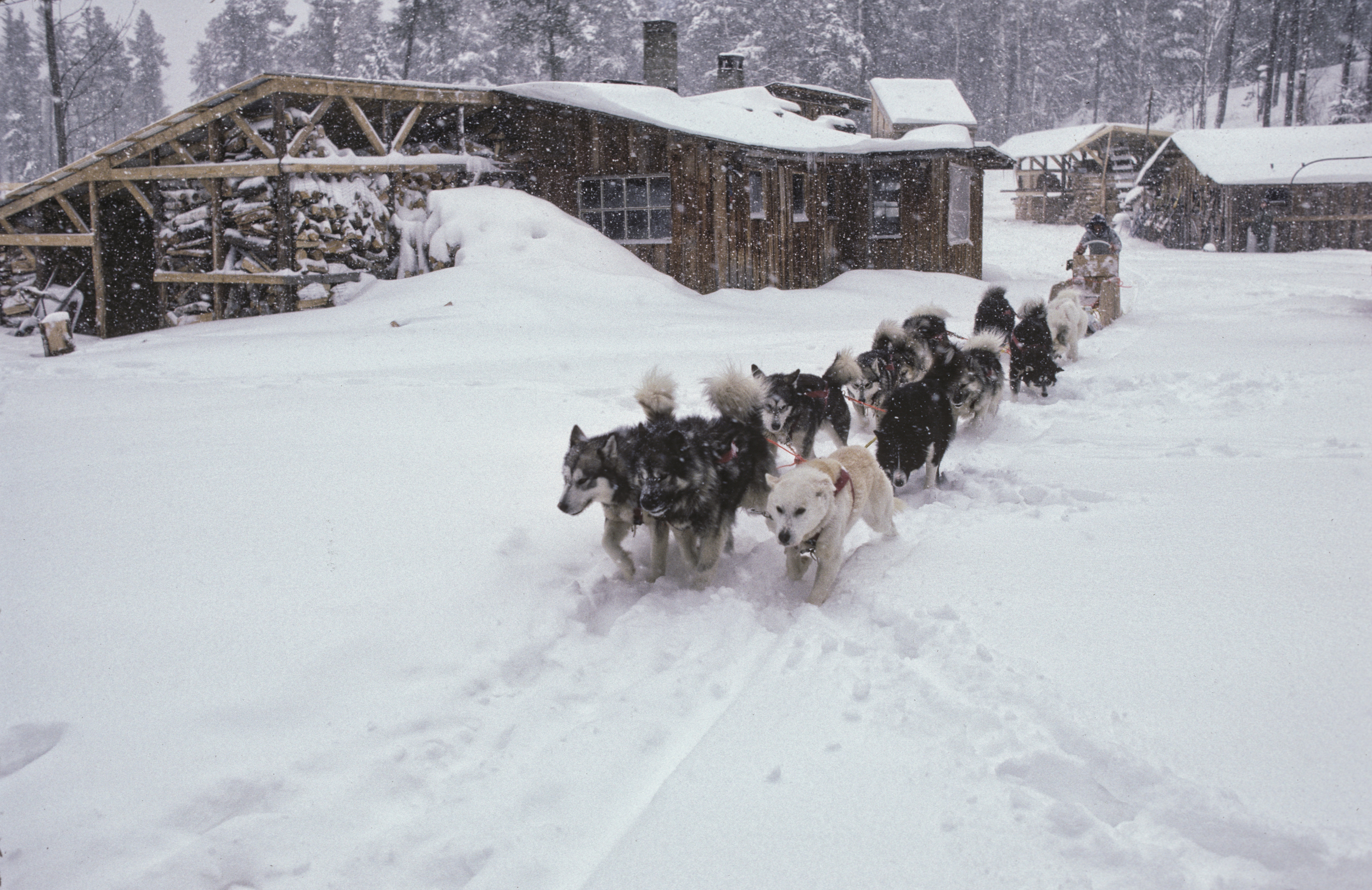 Keizo trained dogs for two winters at the Ely Homestead. ©Trans-Antarctica photo by Per Breiehagen