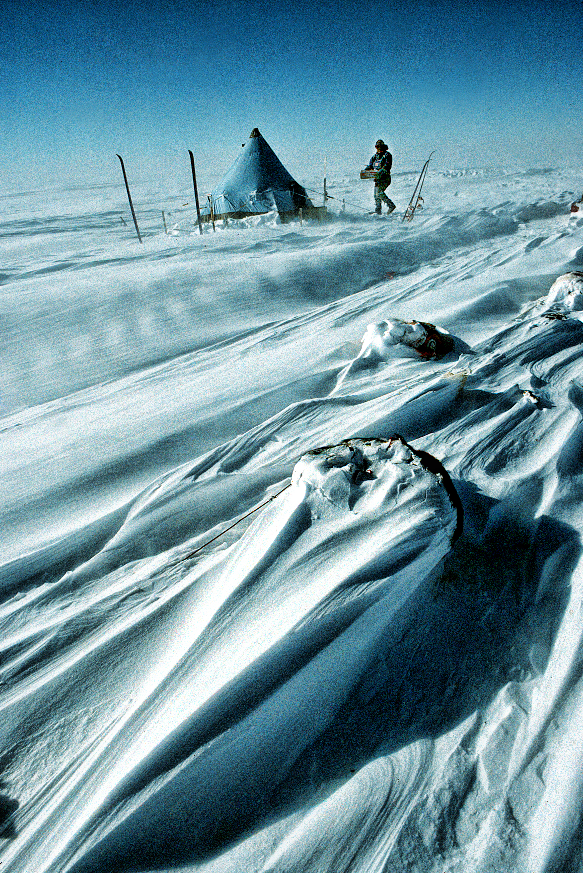 Geoff's pyramid tent and Antarctic sastrugi that has formed around the sleeping dogs. ©Trans-Antarctica photo by Per Breiehagen
