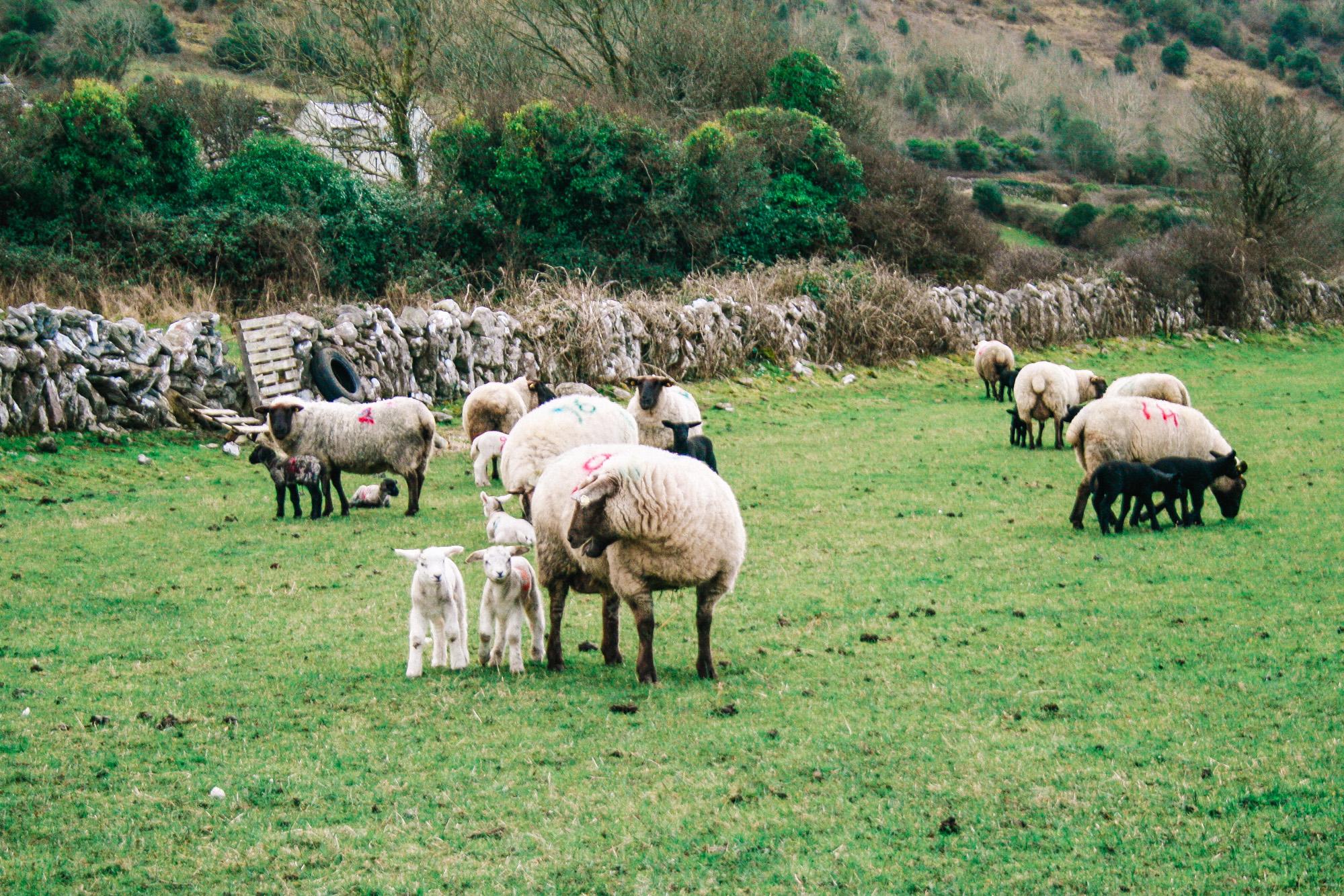 Hike to a Castle- Ballyvaughan, Ireland | Kenslie-2.jpg