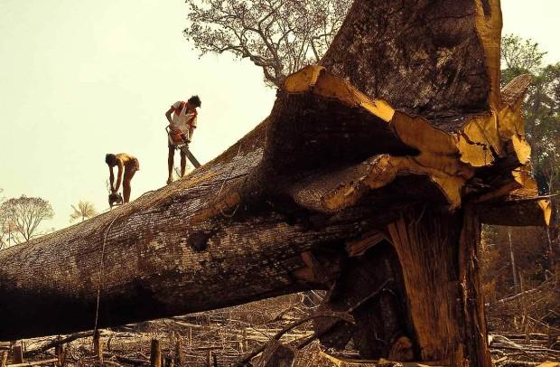 Deforestation of Amazon RainForest