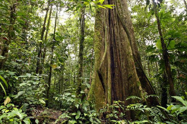 The Amazon Rainforest.  Source .