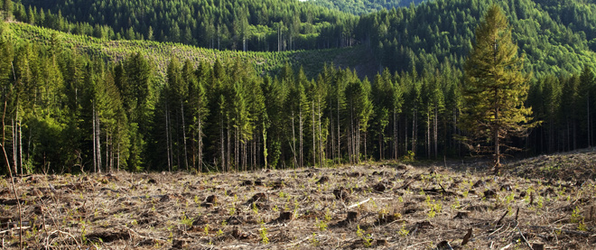 Forest restoration in China.  Source .