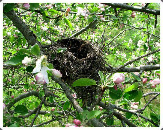 apple_tree_in_bloom2.jpg