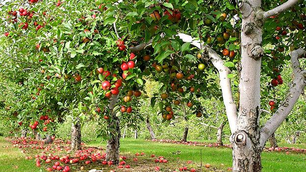 orchard_Liz-West.jpg