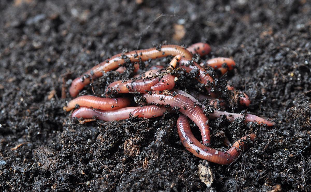 wormgruntinghero.jpg