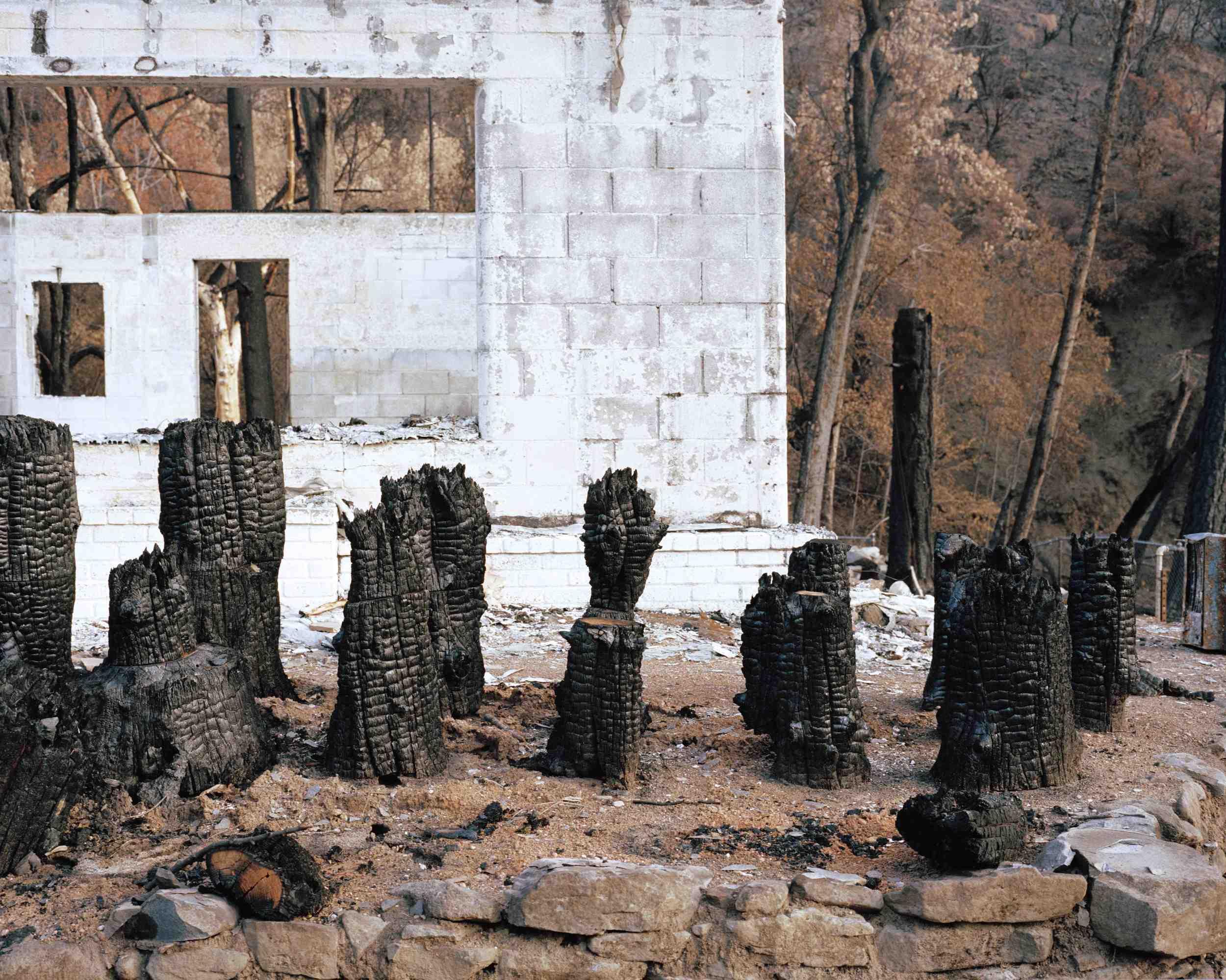 ATF Burnt Stumps.jpg