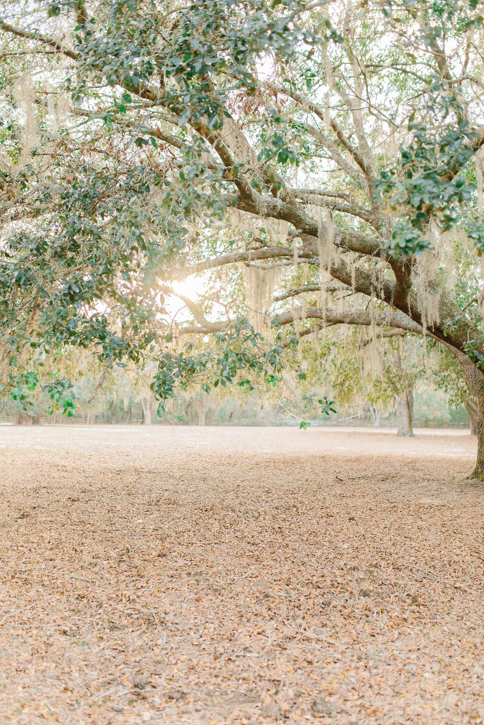 jacksonville-engagement-photography_0013.jpg