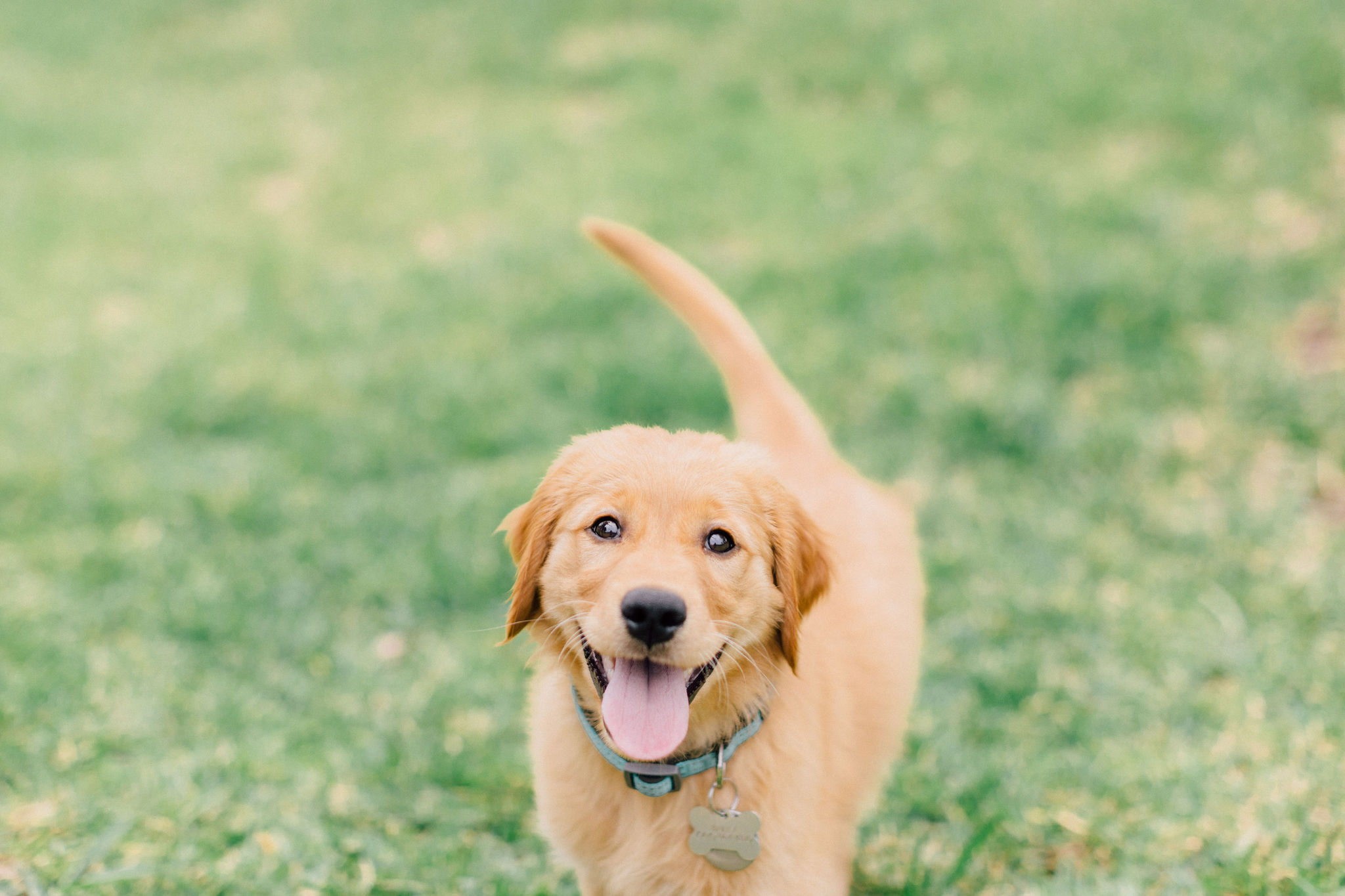 Pupper Collection - 30 minutes.1 dog.1 location in the Orlando-area. (in-home or outdoor)25+ edited images.online gallery + print release.$100