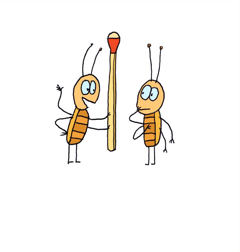 match_bug_800.jpg