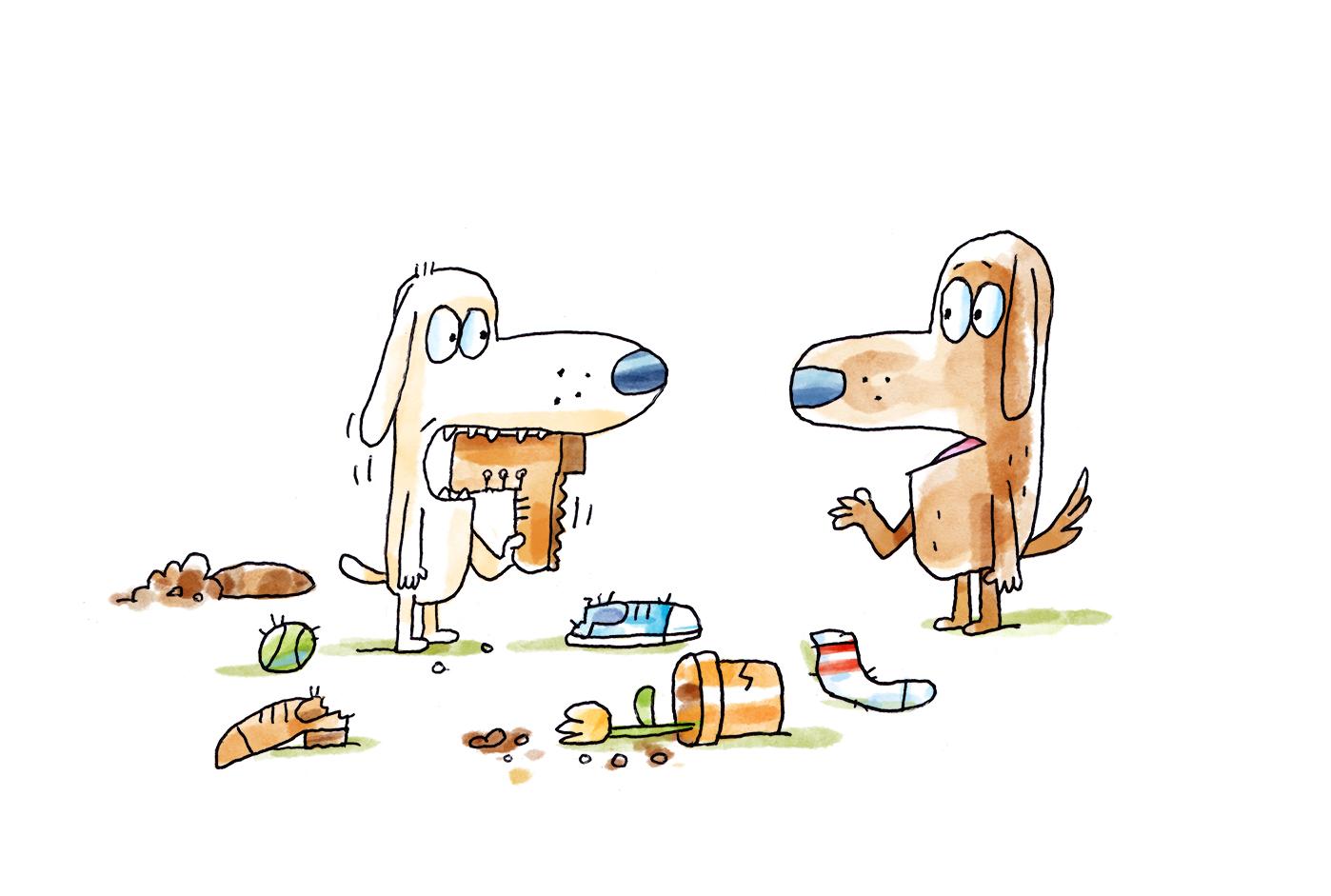 chew_toy_dog_1500.jpg