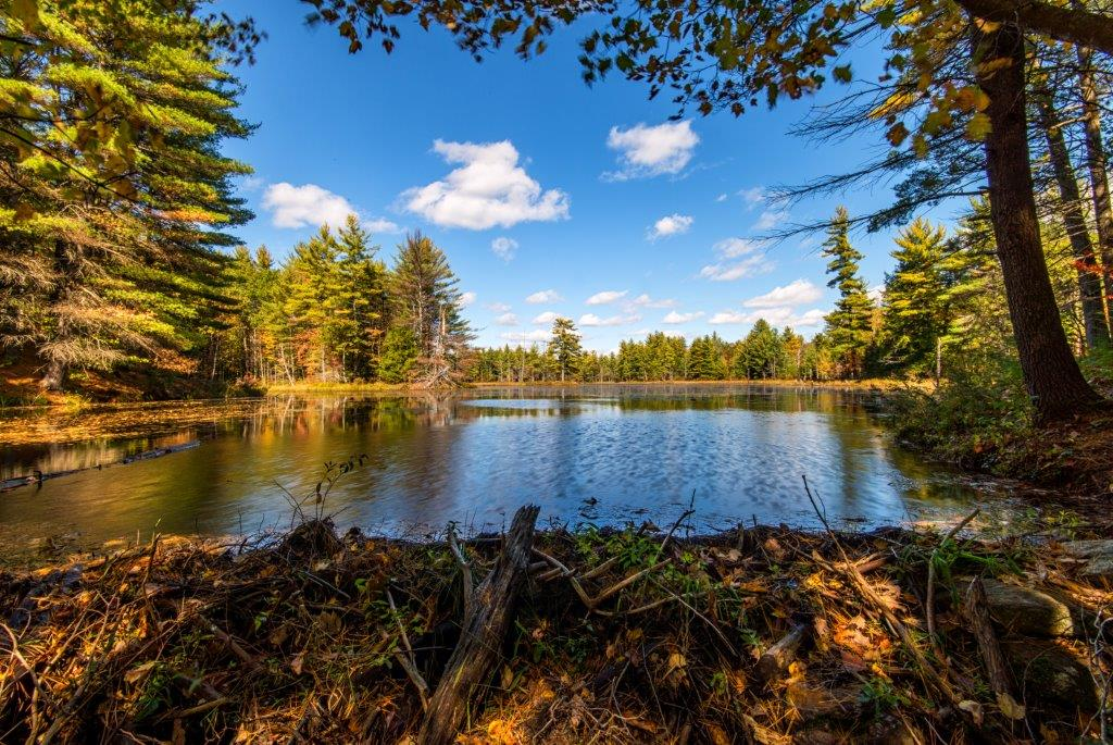 Stinson Mill Pond