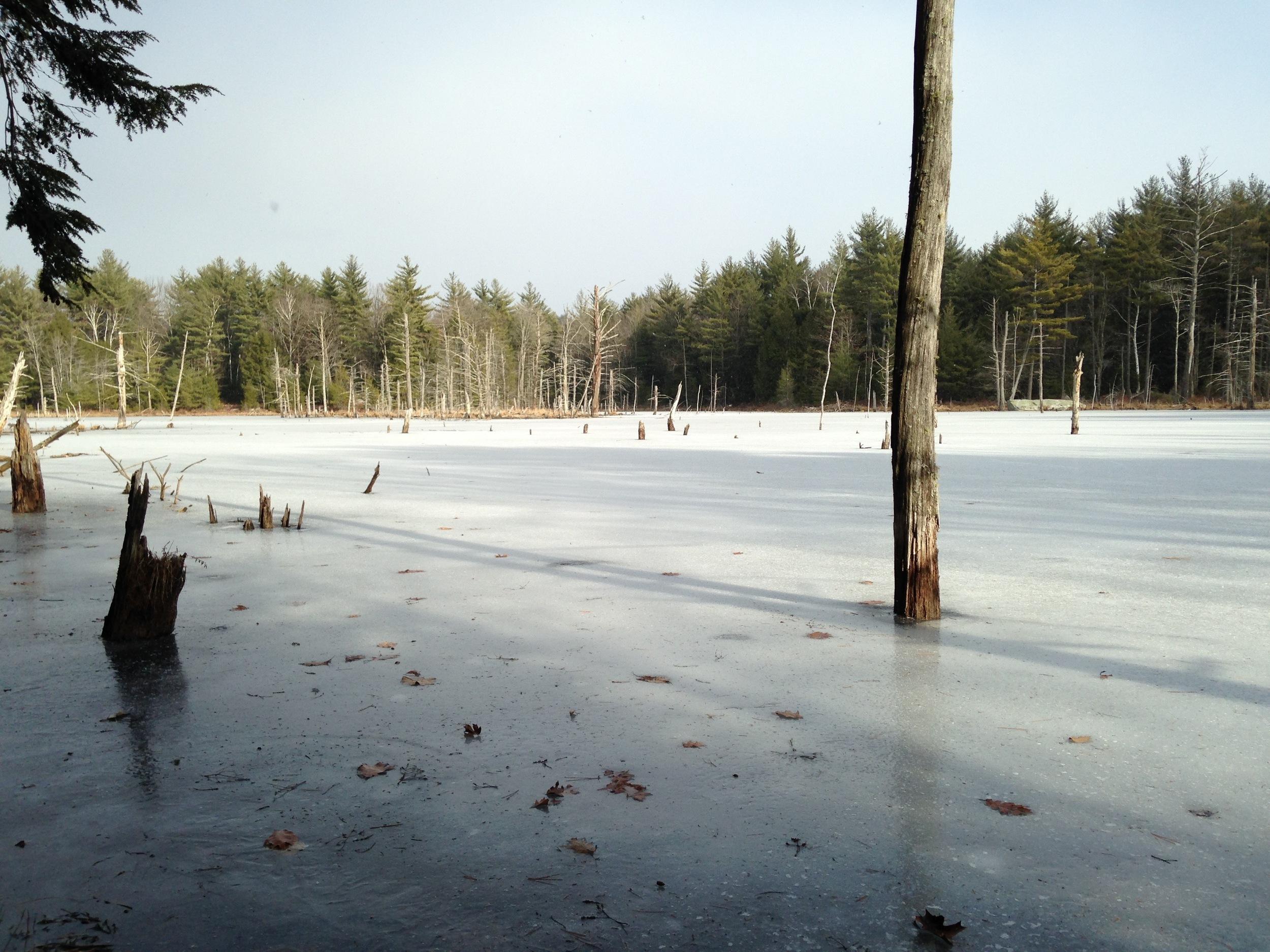 Beaver pond in winter