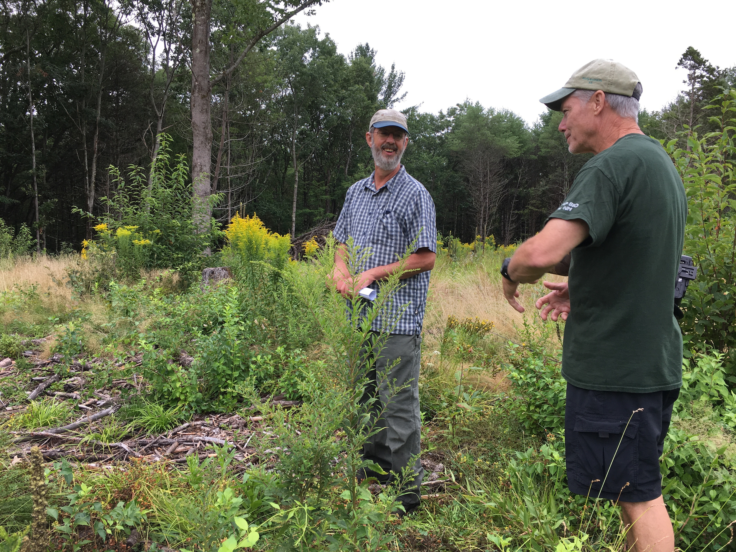 UNH County Extension Forester Tim Fleury (center) talks with Conservation Commission Vice Chair Drew Groves about maintaining a recent timber cut to reopen an old field for wildlife habitat. Fleury conducted a monitoring visit recently at the Kimball Pond area for the U.S. Forest Service.
