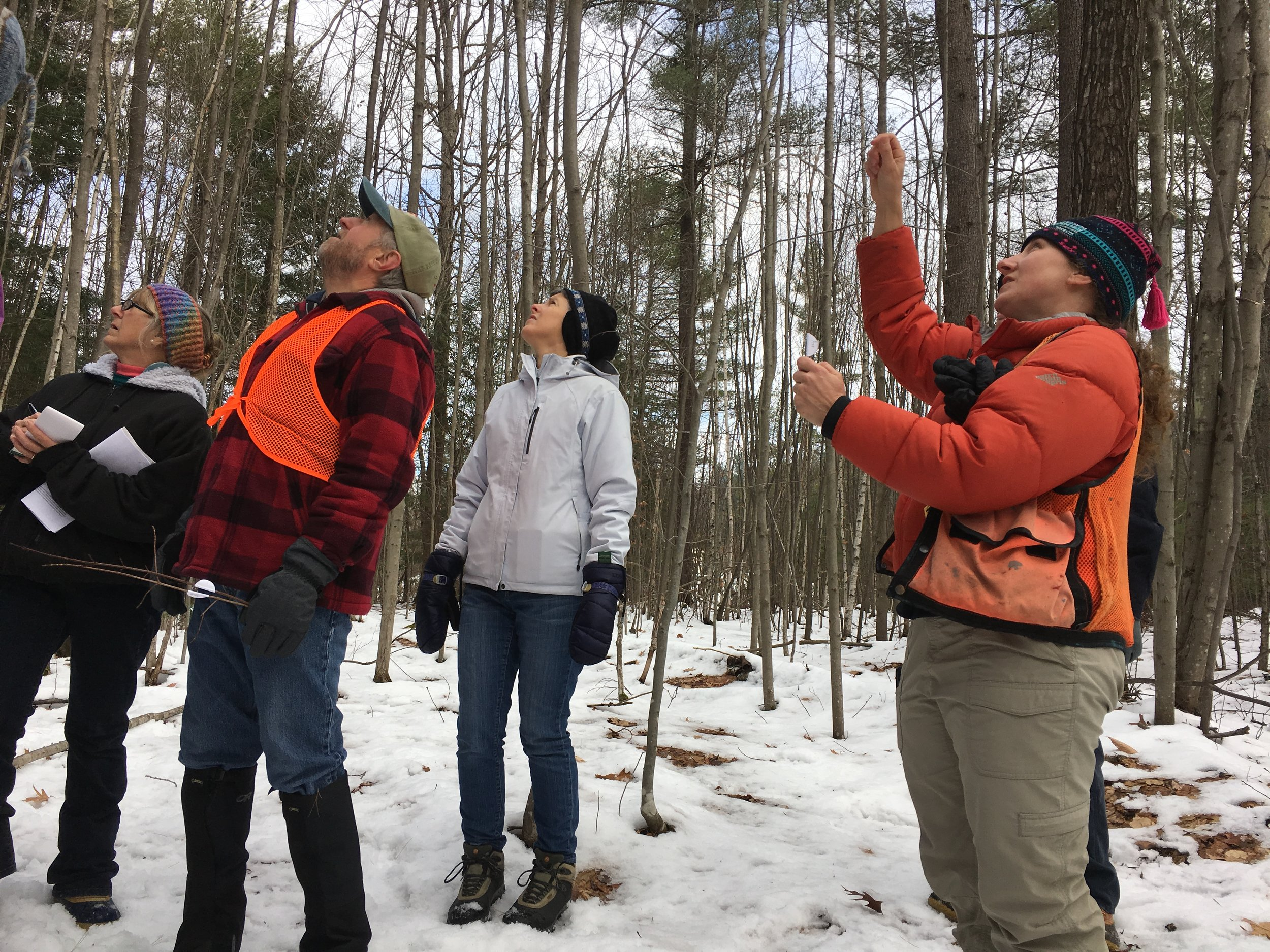 Forester Wendy Weisiger explains how opposite or alternate twig configuration are clues about a tree's identity