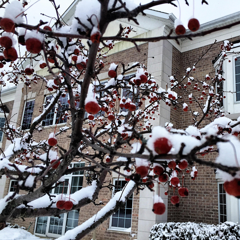 Wisconsin_January