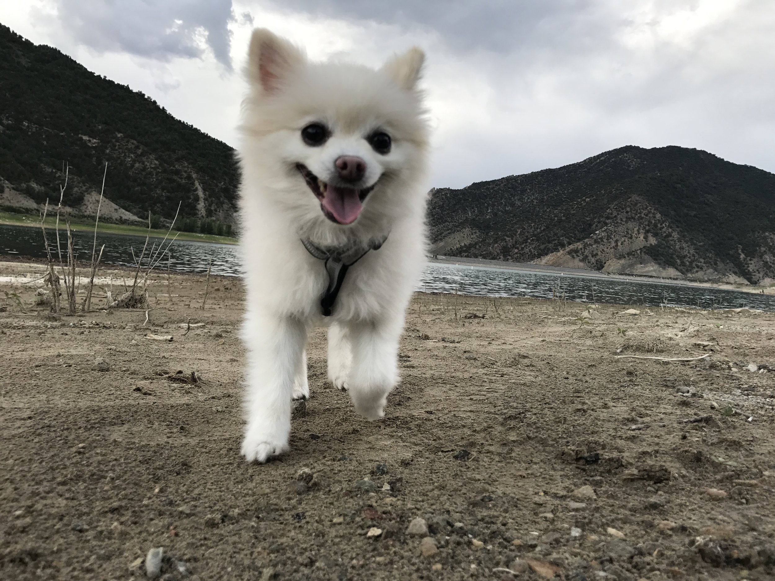 Brooke_Clay_RanchDog_Pomeranian_0030.JPG