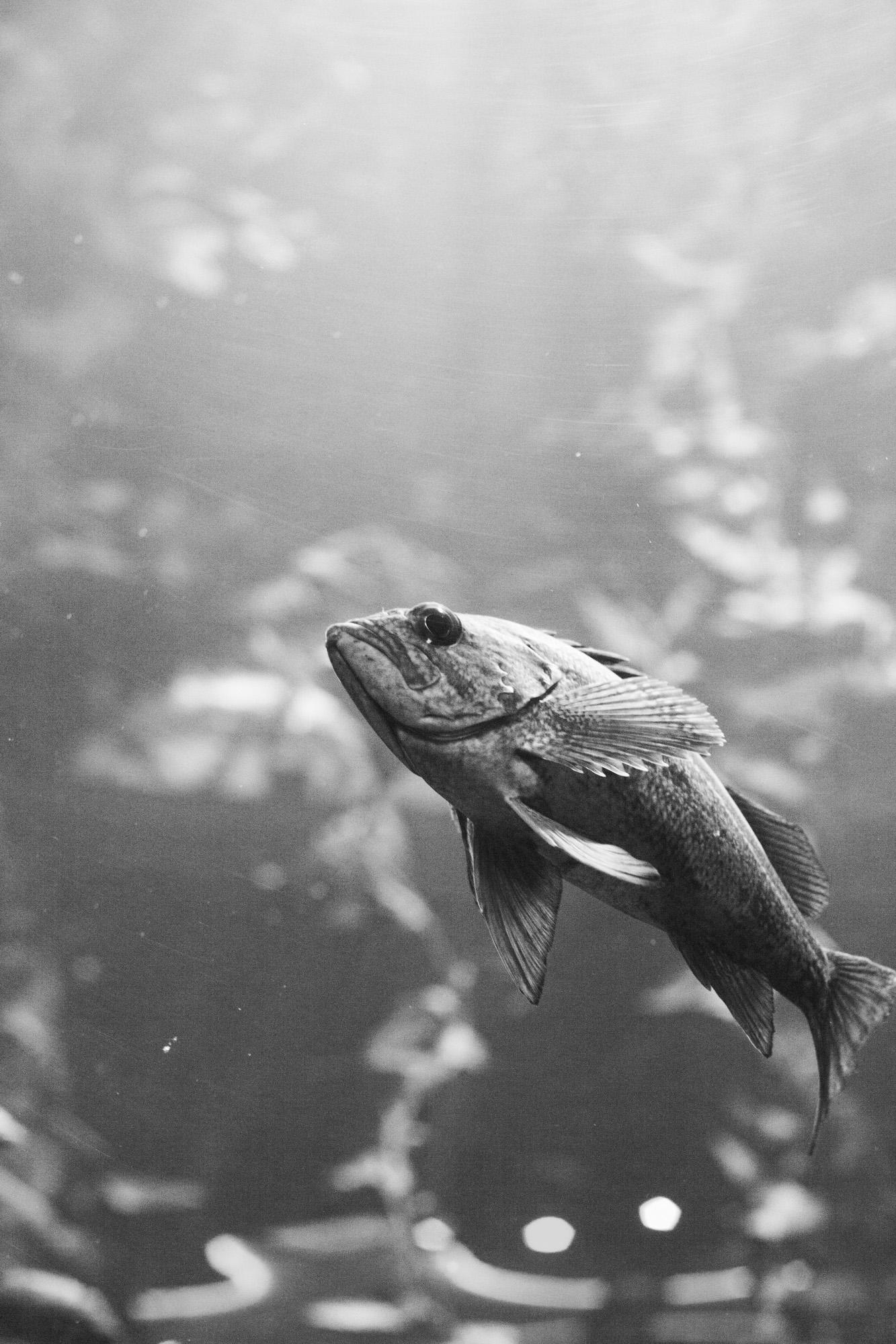 aquarium_lolitas-3.jpg