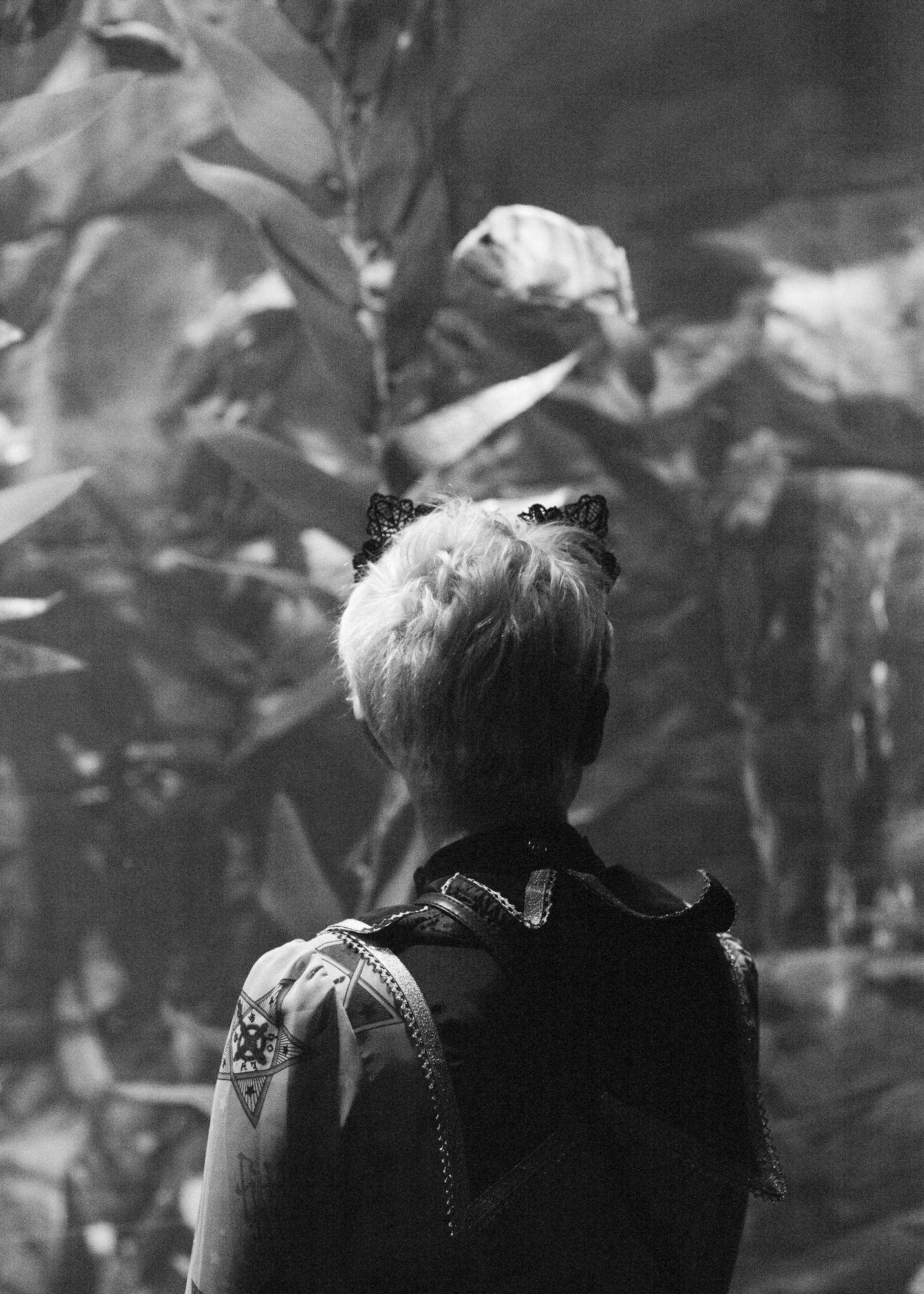 aquarium_lolitas-6.jpg