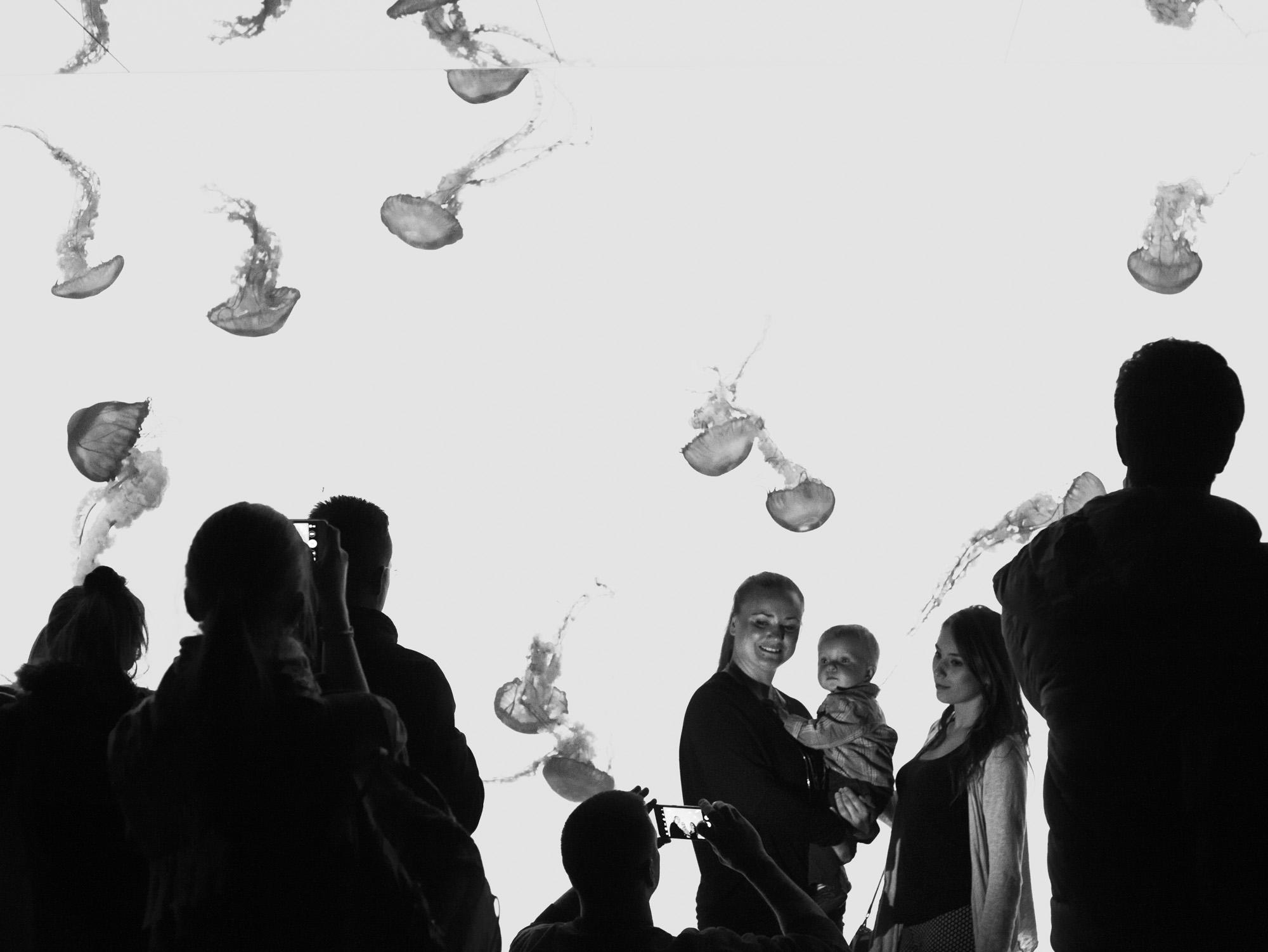 aquarium_lolitas-40.jpg