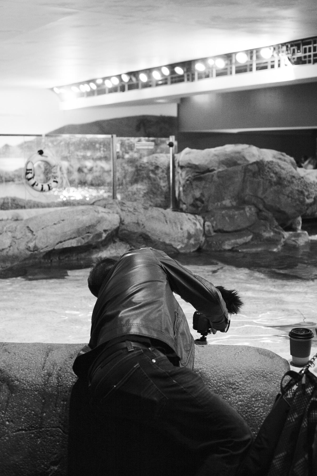 aquarium_lolitas-65.jpg