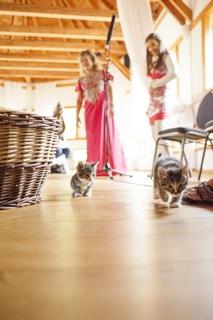 Kitten-escapee-scared-tamanga.jpg