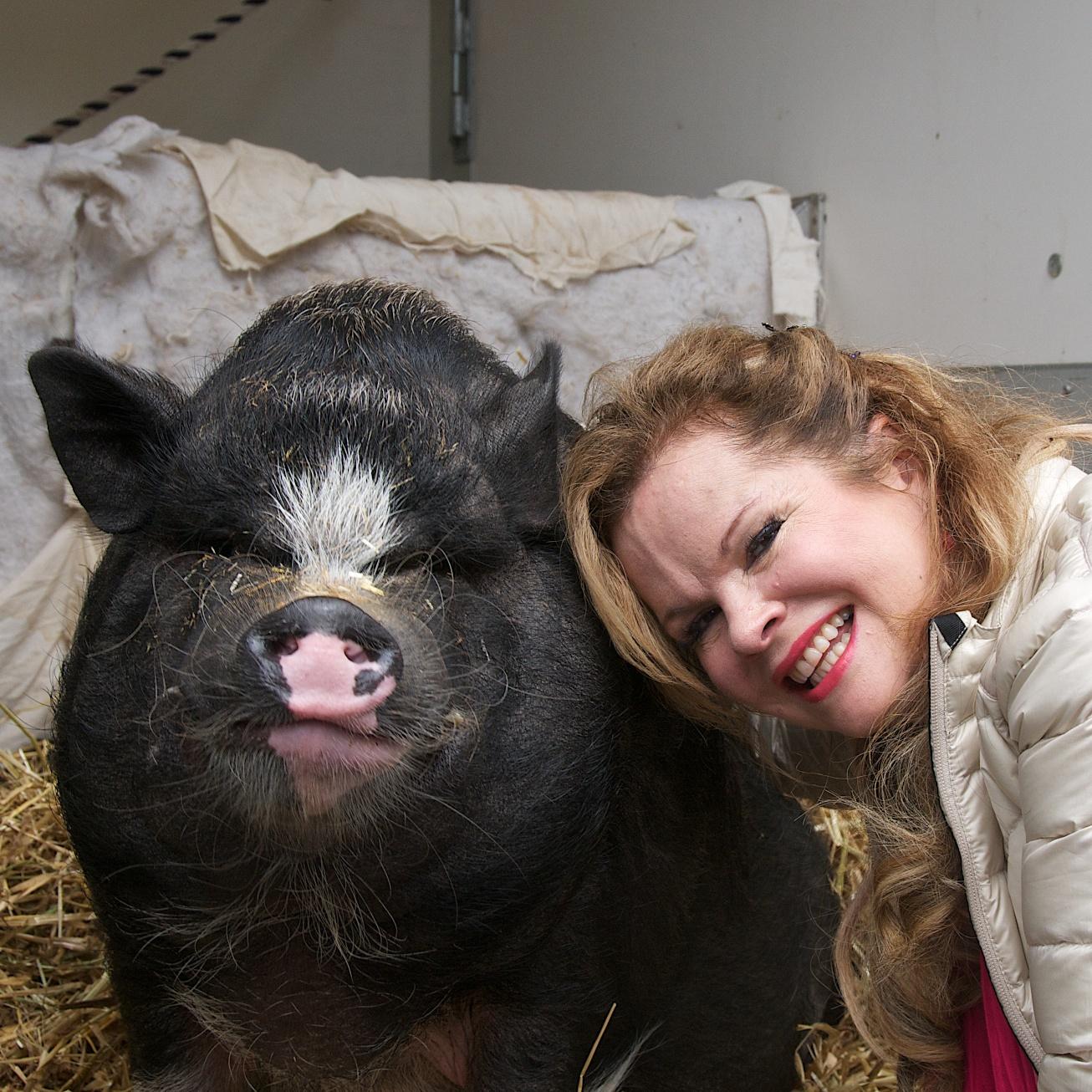 Pig 7.jpg