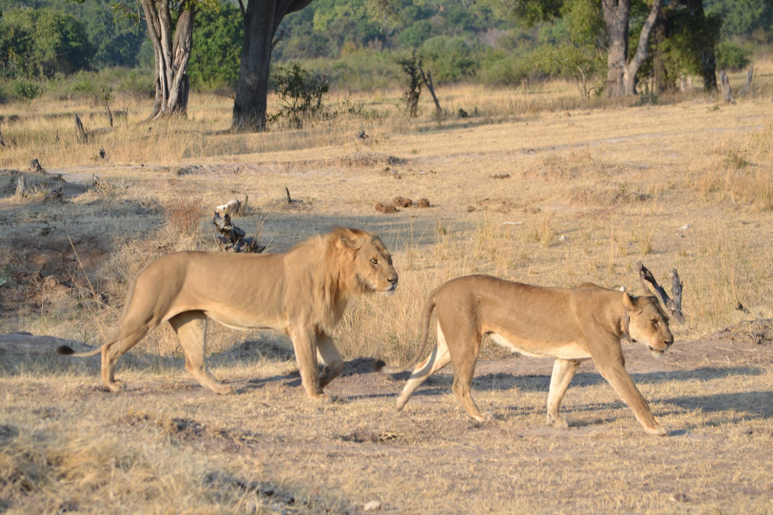LIONS-DOCS-PARENTS.JPG