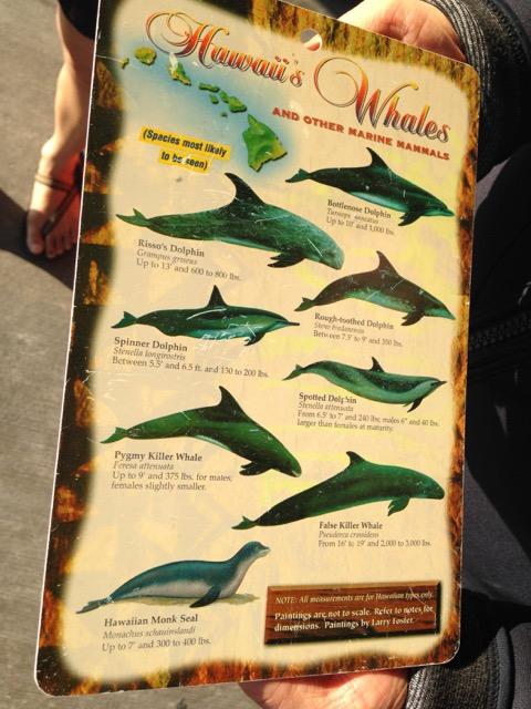 Hawaiian-whales-description.jpg