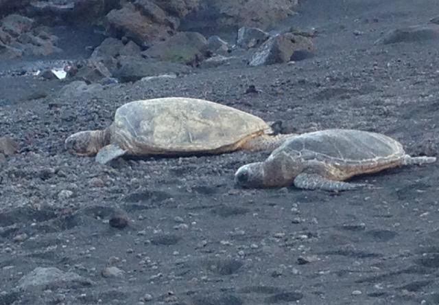 Turtle-friends-showed-up-to-thrill-us.jpg