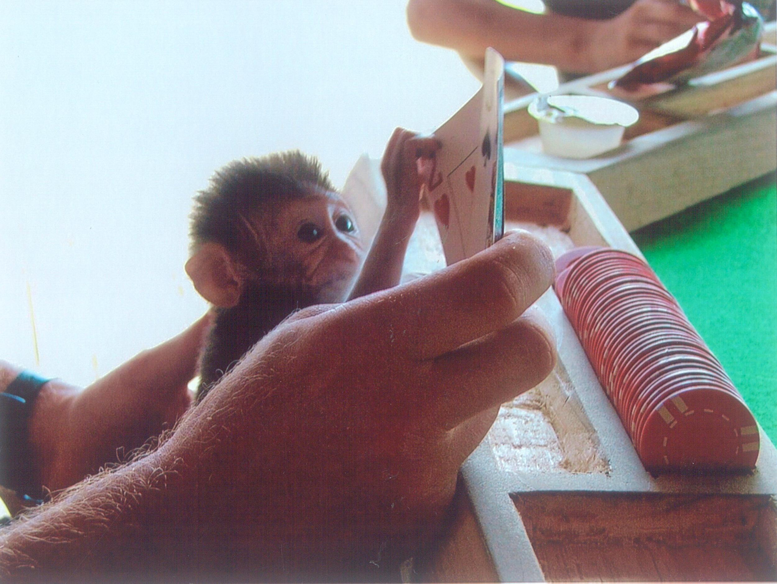 61. Sheshunoff - Monkey - Playing Poker Lightened Up.jpg