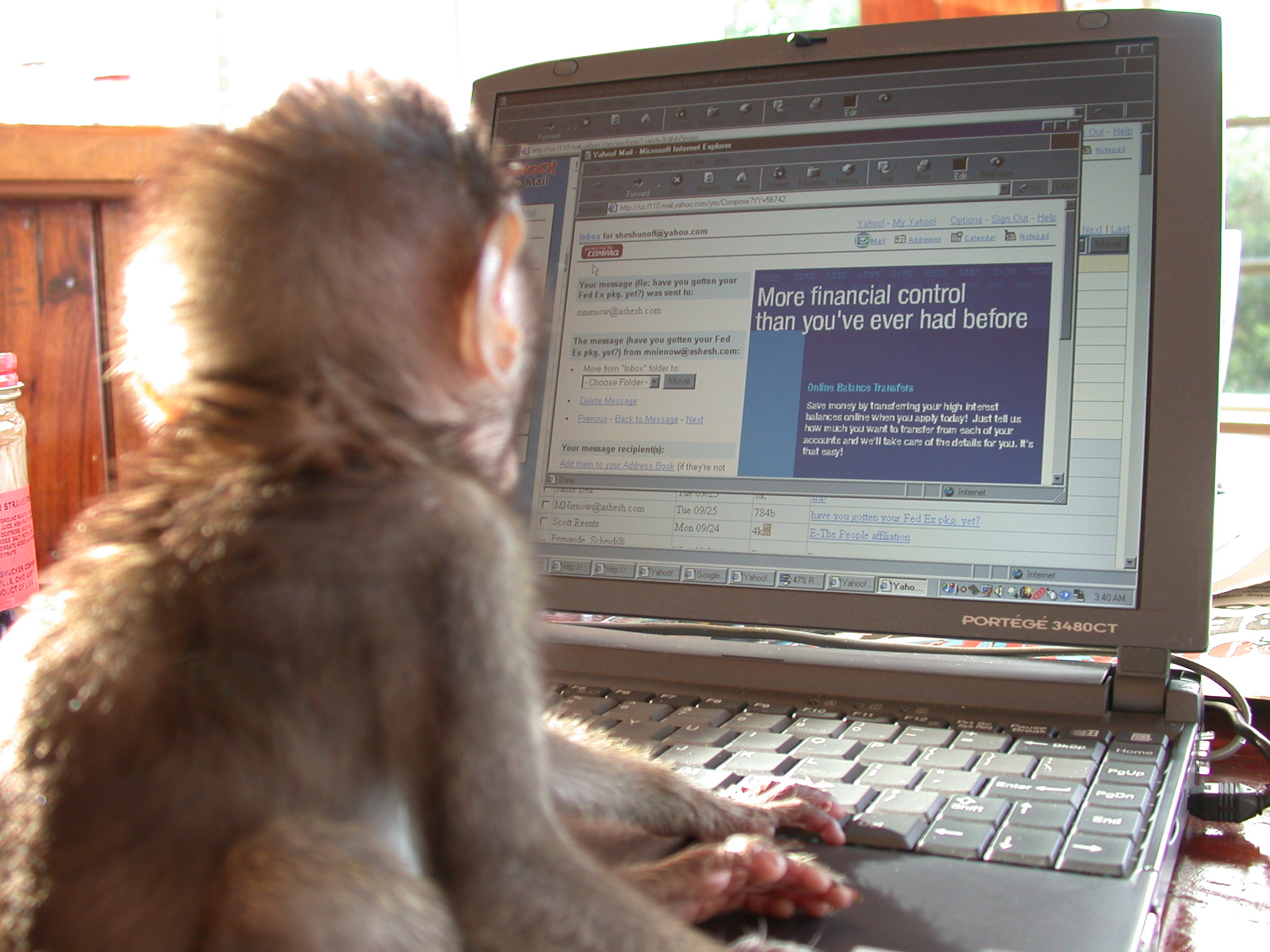 Monkey in front of a computer - Sheshunoff - abeginnersguidetoparadise.com.JPG