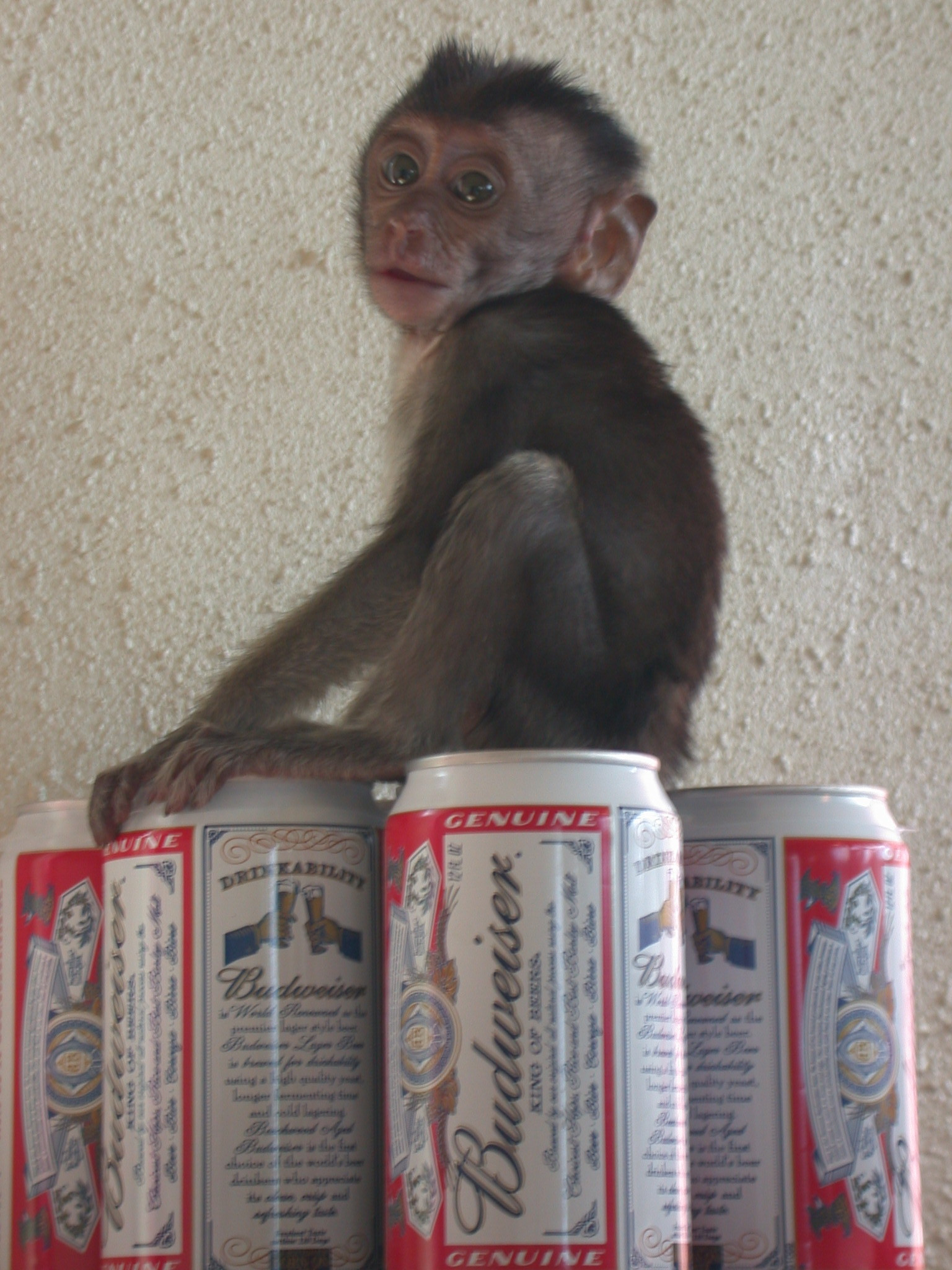 66. Sheshunoff - Monkey - With Beer.JPG