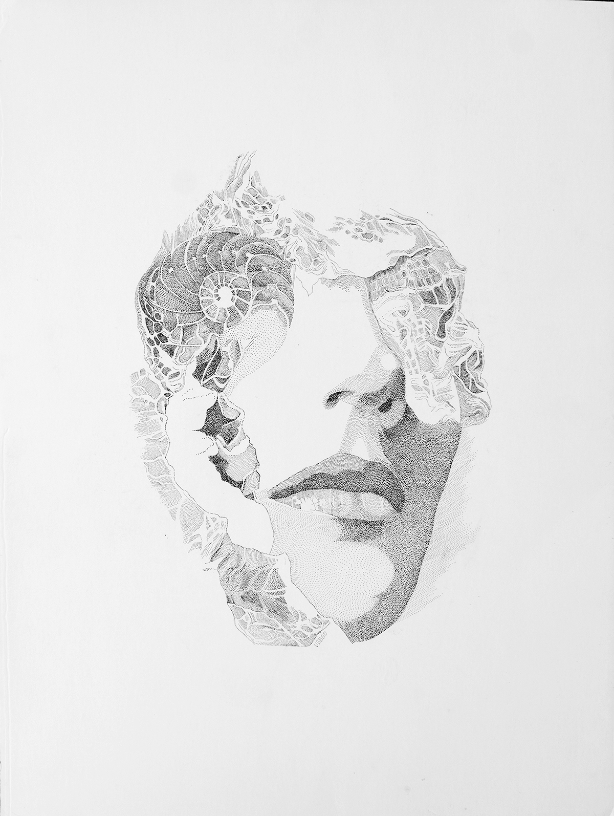 Nautilus, 40x30 cm, tinta sobre papel, 2012, $500 (impresión en papel couché, 17x11 pulgadas) (1).jpg