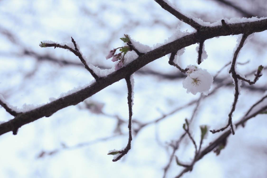 March Snowday (3 of 12).jpg