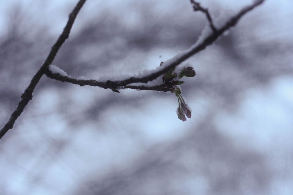 March Snowday (12 of 12).jpg