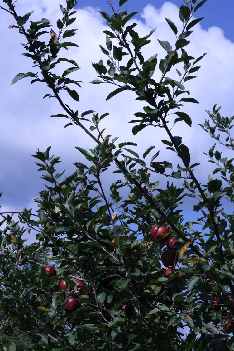Levering Orchard (67 of 69).jpg