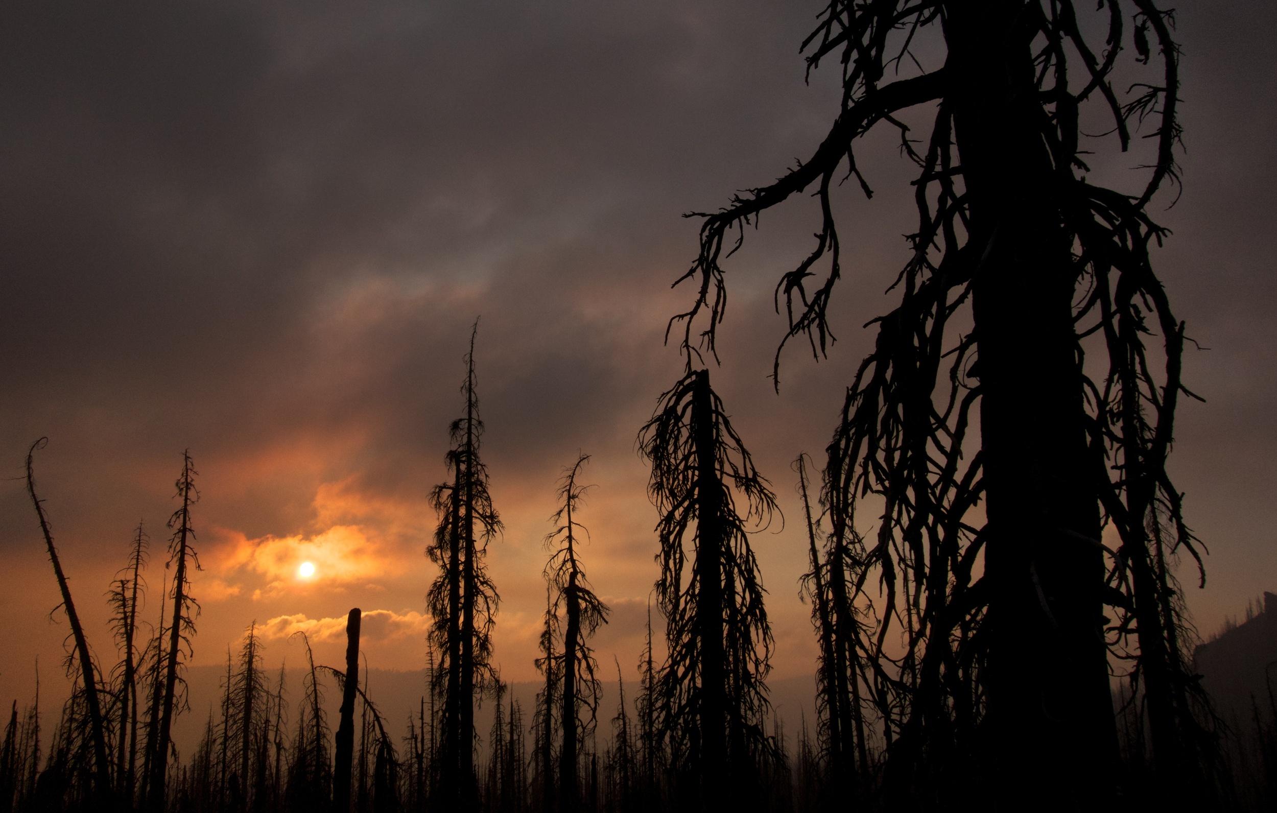 Oregon Wild Fire
