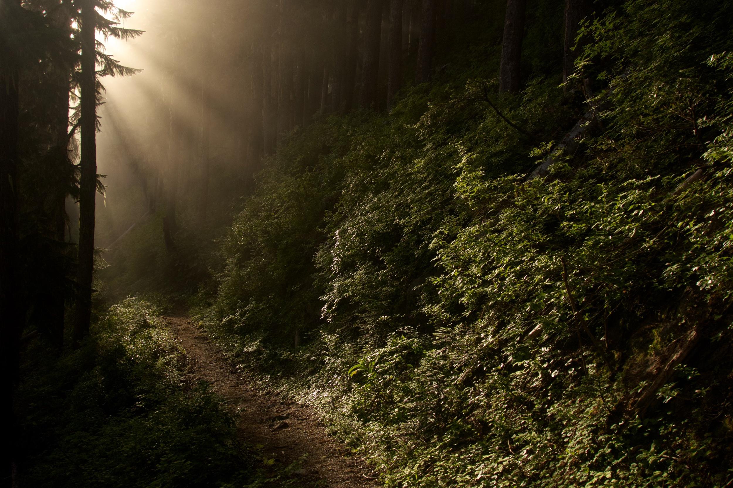 Misty Northwest Forest at Sunrise