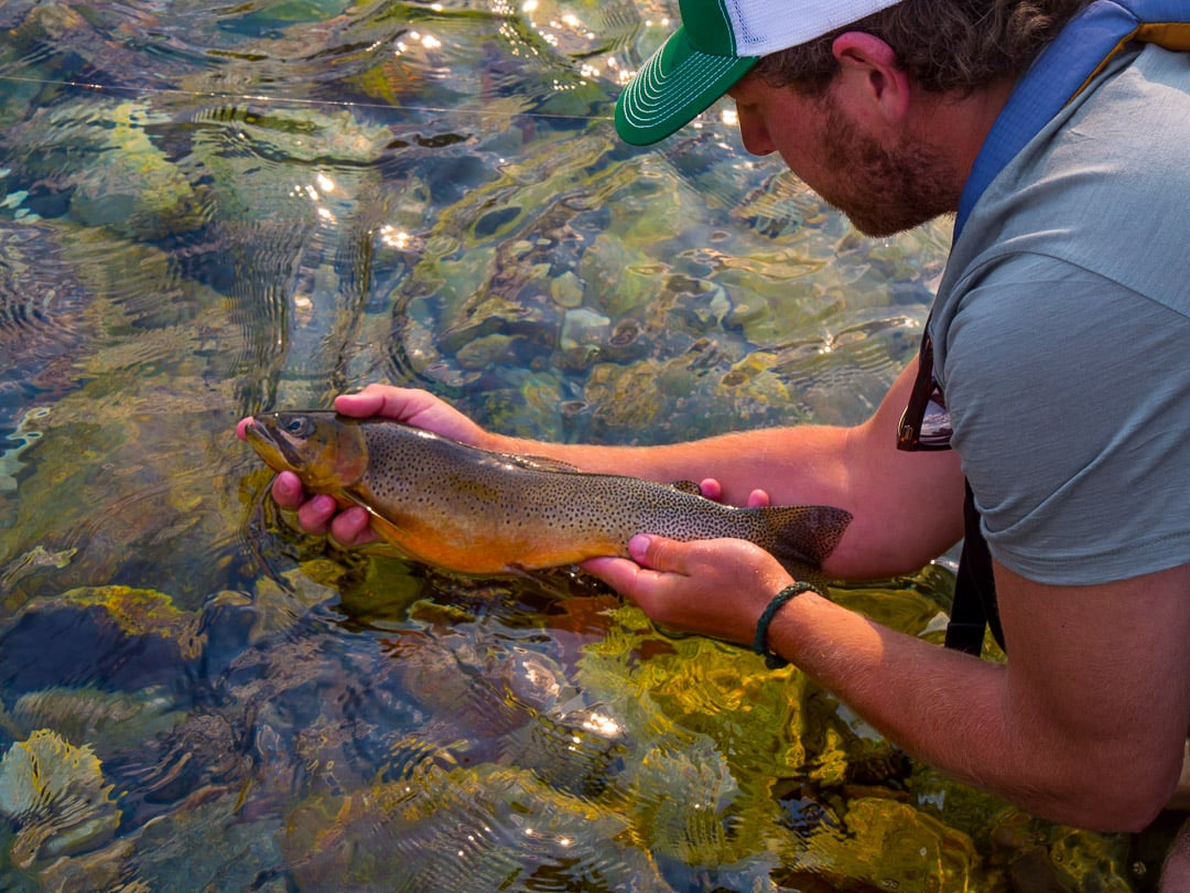 Wild Confluence co-founder, Colin Arisman, shows off a particularly beautiful cutthroat trout - Photo: Luke Kantola