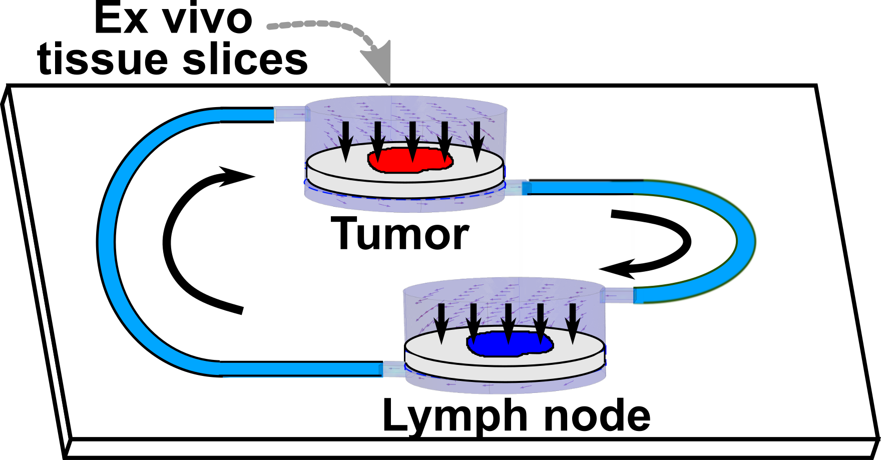 """Linking two tissues on-chip for tumor-immunity - Shim S, Belanger MC, Harris AR, Munson JM, & Pompano RR. """"Two-way communication between tissues on a microfluidic chip: application to tumor-lymph node interaction."""" Lab on a Chip (2019), 19, 1013-1026. [PubMed] [DOI: 10.1039/C8LC00957K]Part of the LOC Organ-, body- and disease-on-a-chip themed collection."""
