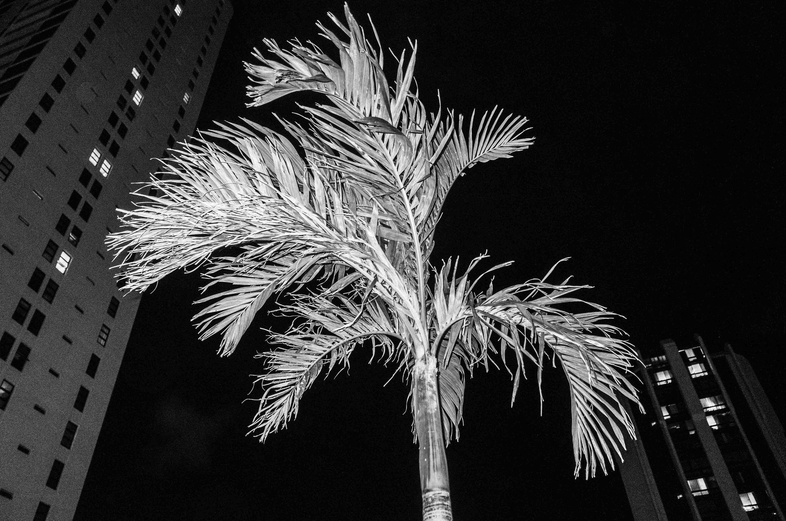 Aloha_Mahalo-3.jpg