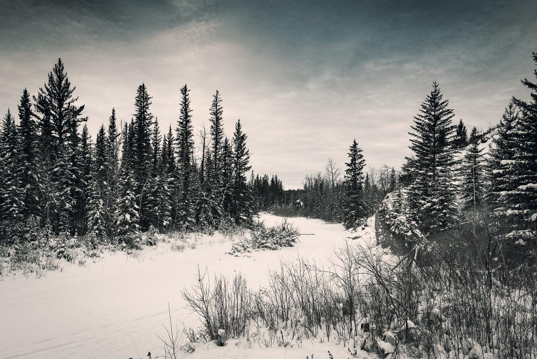 Calgary-Fish-Creek-YYC-4.jpg