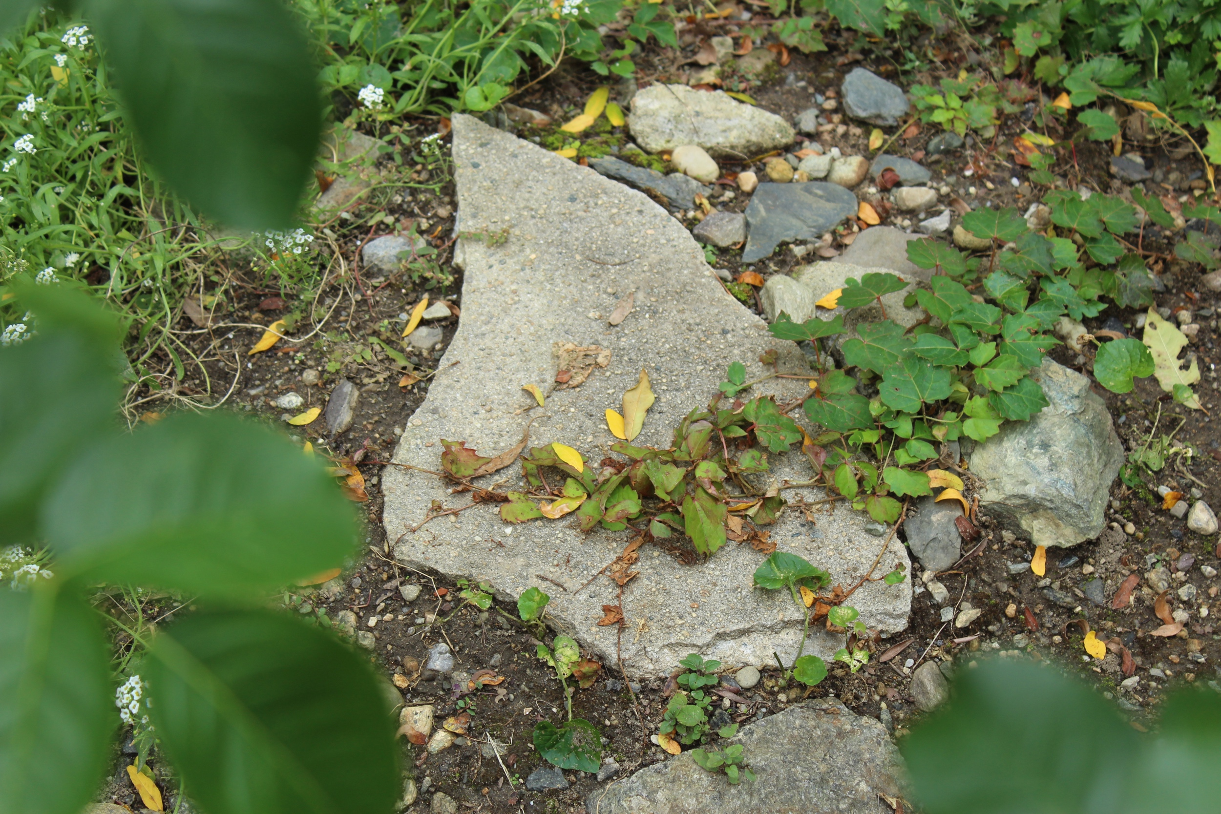 Remnants found on the property from Urban Renewal's demolitions of the 1960s were incorporated into this artist's garden design Photo by Jessica Jennings
