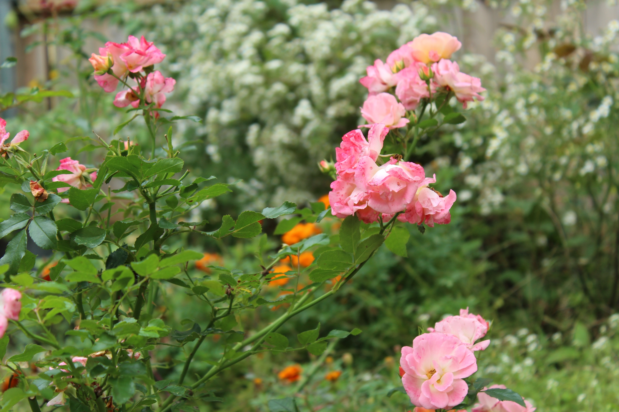 Garden on Hammond Street Photo by Jessica Jennings