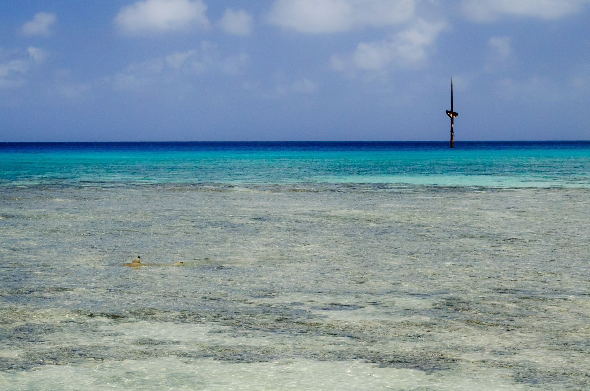 A service mast of the  Terushima Maru  marks where the shipwreck lies in the lagoon off of Taroa Island while a black-tipped reef shark explores the shallows